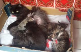 Katzenmama nimmt Findelkind auf - so schön ...