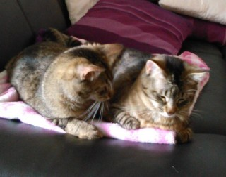 Minka und Luca abzugeben - vemittelt